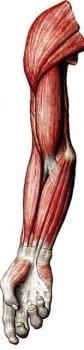 Бальзам для мышечной системы В-400
