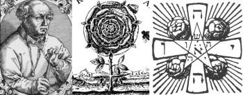 Роза: сила растения